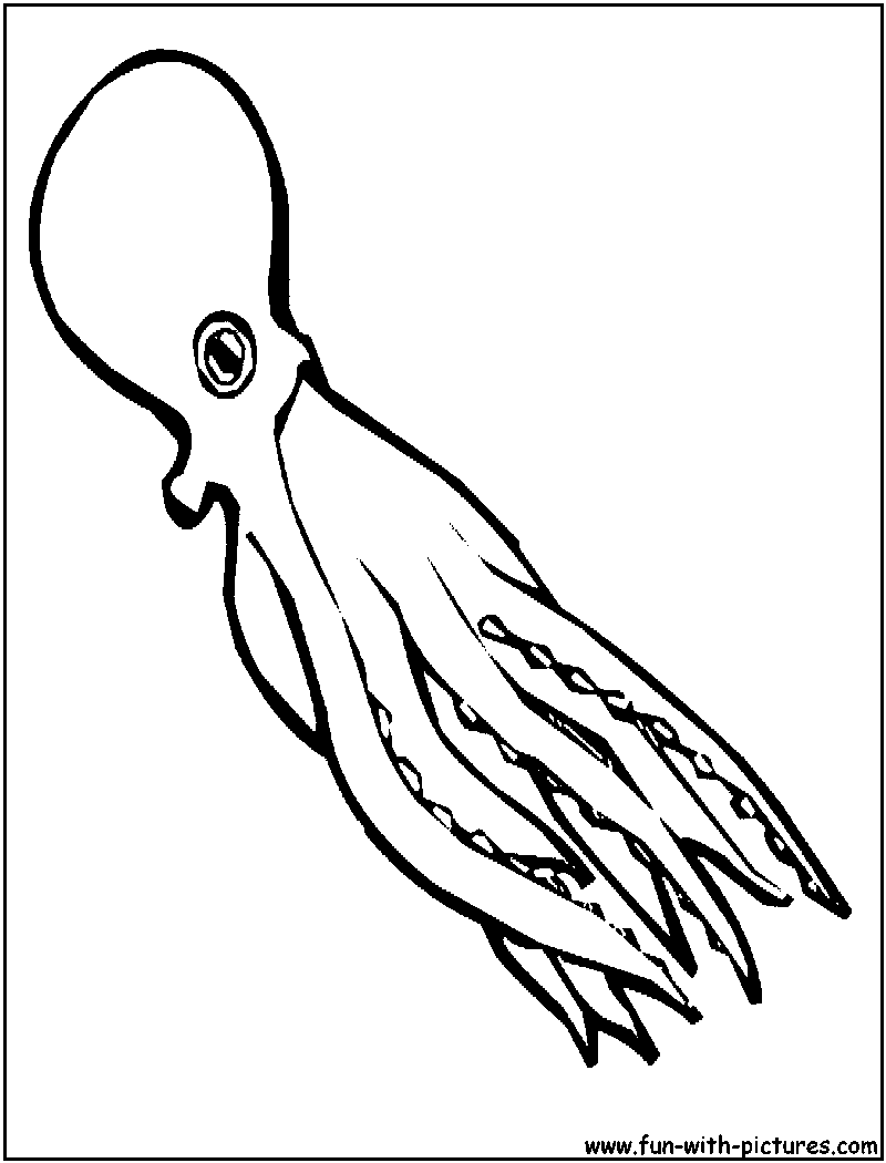 Squid coloring pages to download and print for free