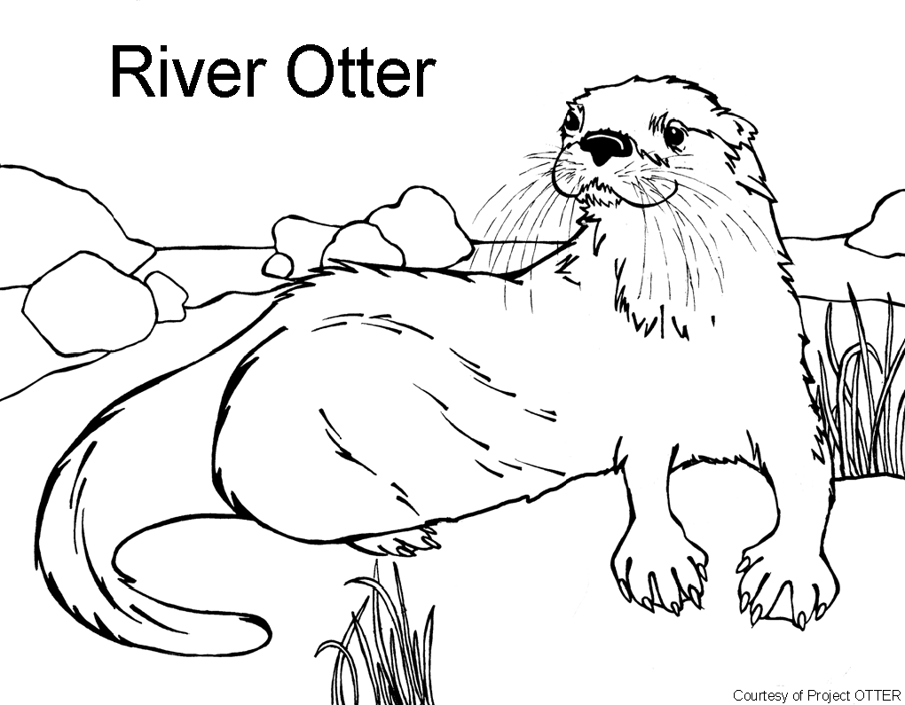 otter coloring pages - Otter Coloring Pages