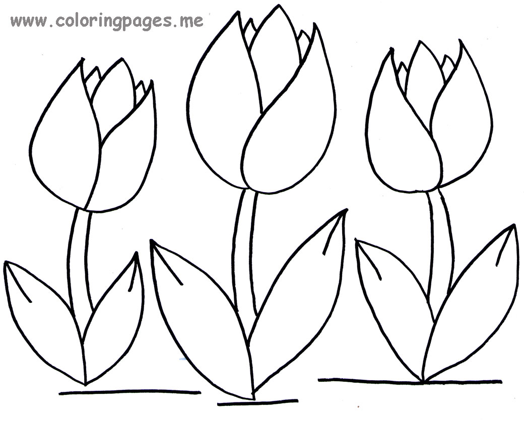 tulip coloring pages - Tulip Coloring Pages