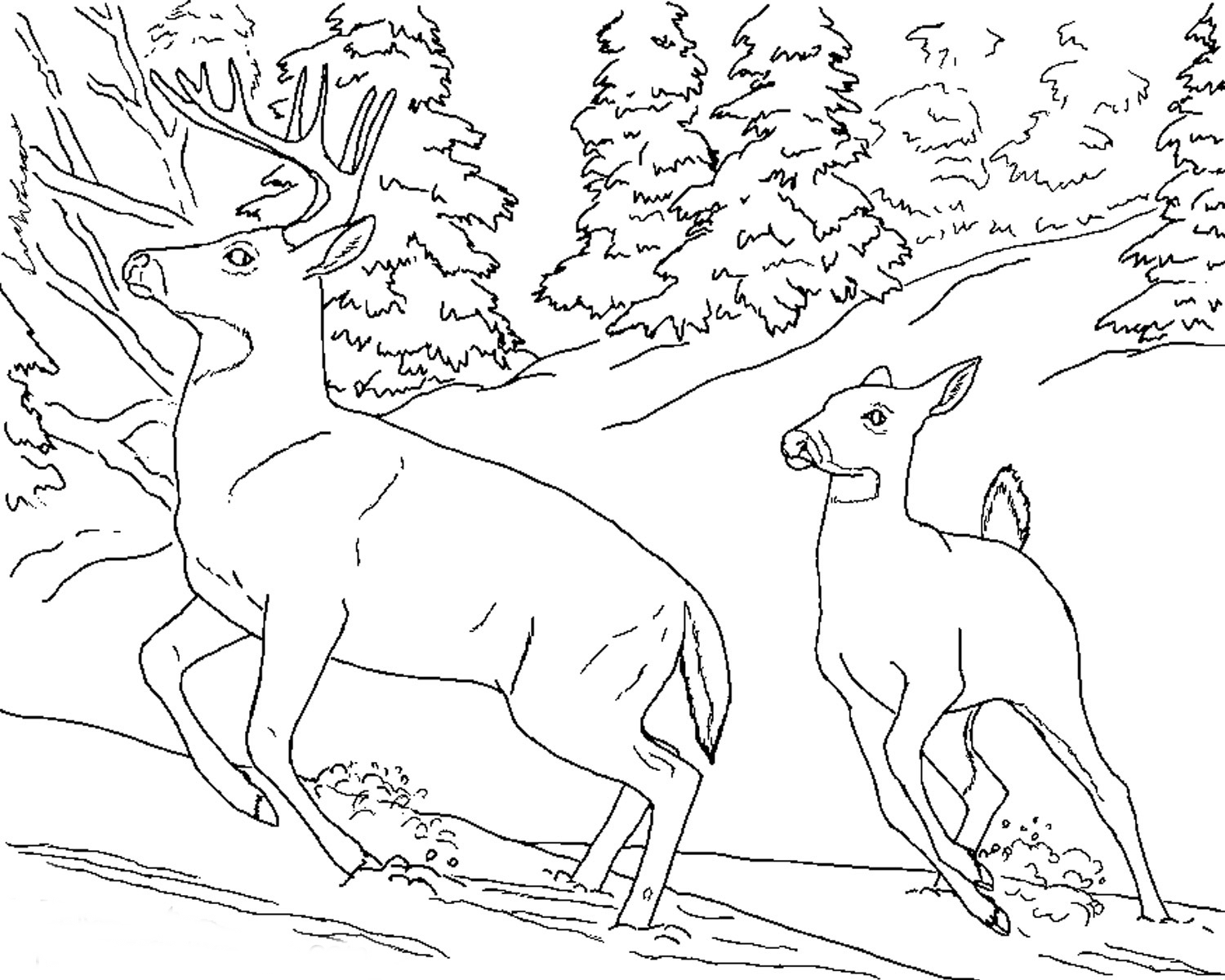 florida animals coloring pages adorable