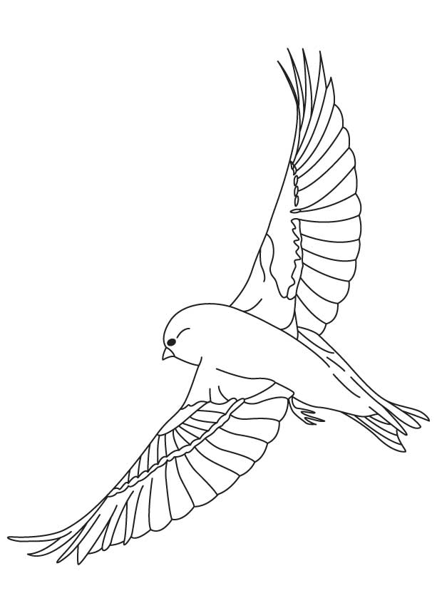 Yellow finch coloring pages download