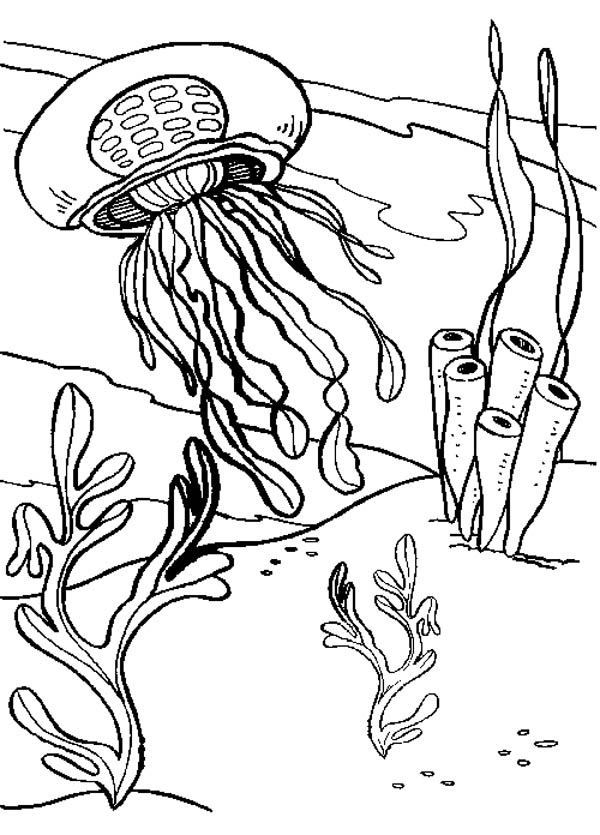 coloring pages of seaweed - photo#15