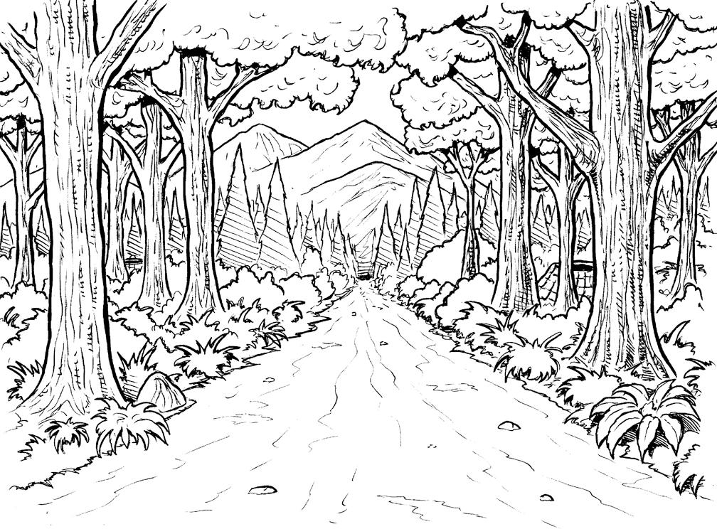 Картинки раскраски на тему лес
