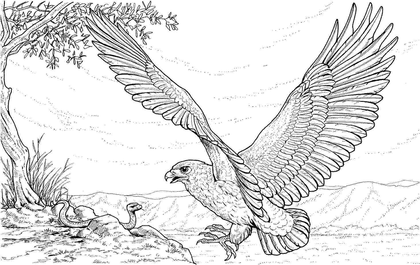 Eagle coloring pages to download and print for free for Eagle coloring pages