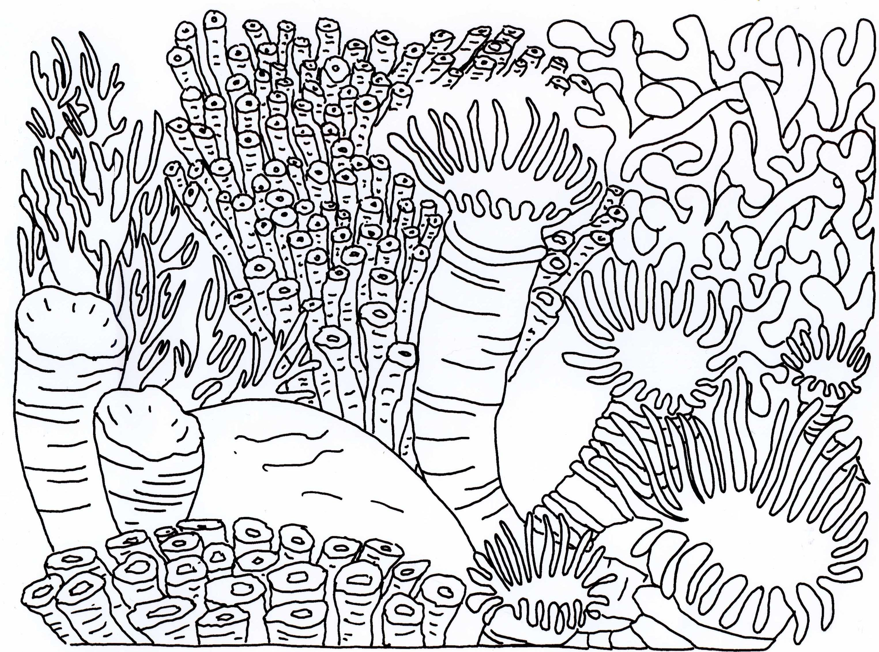 Coral reef coloring pages to download and print for free for Coloring pages of coral reefs