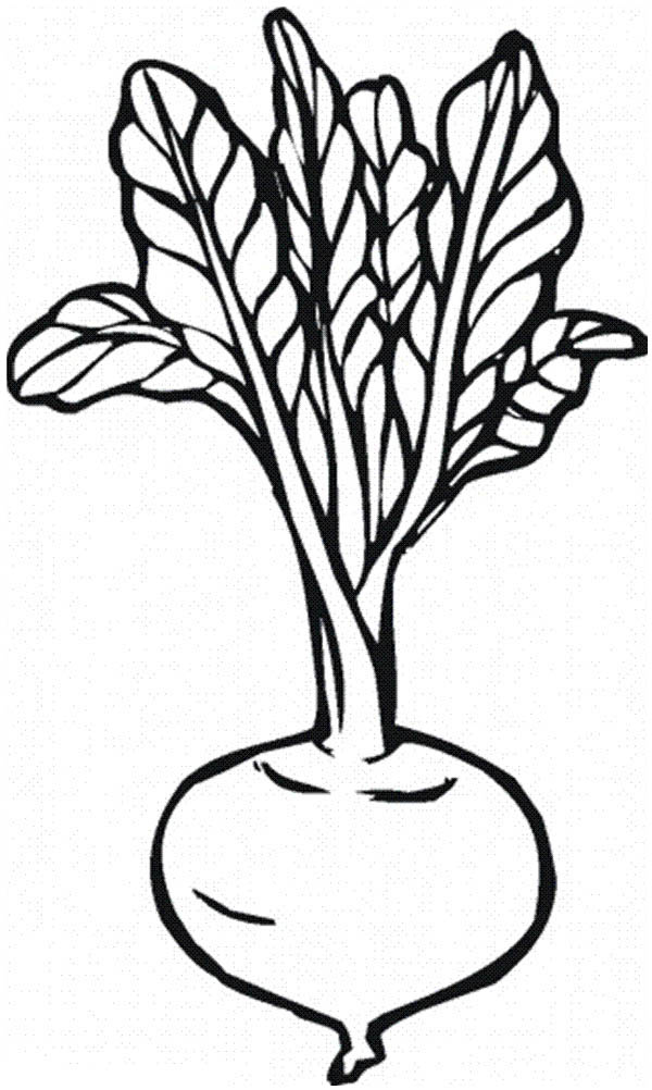 beetroot coloring pages download and print for free