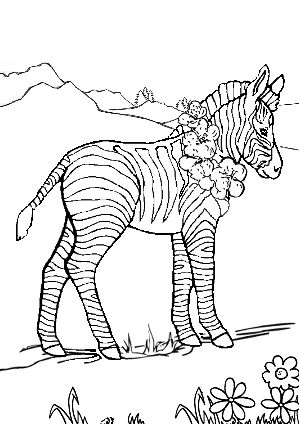 Marty zebra coloring pages download and print for free
