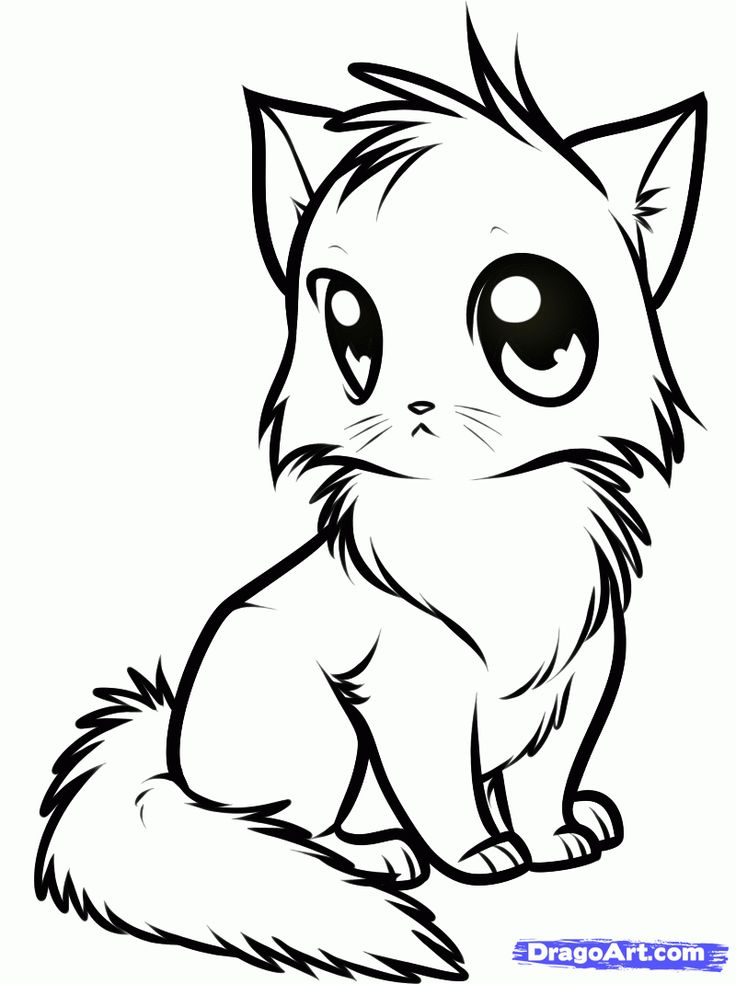 Merveilleux Anime Cat Coloring Page / Image Source