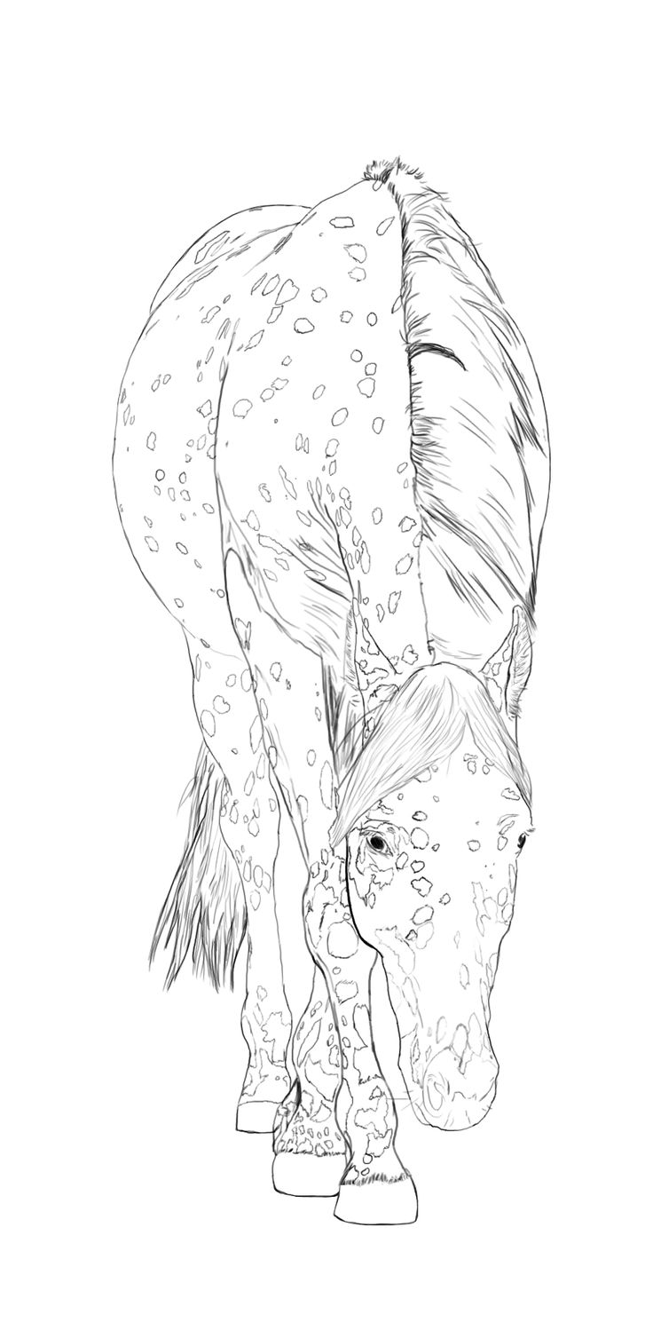 Palomino horse coloring pages download and print for free