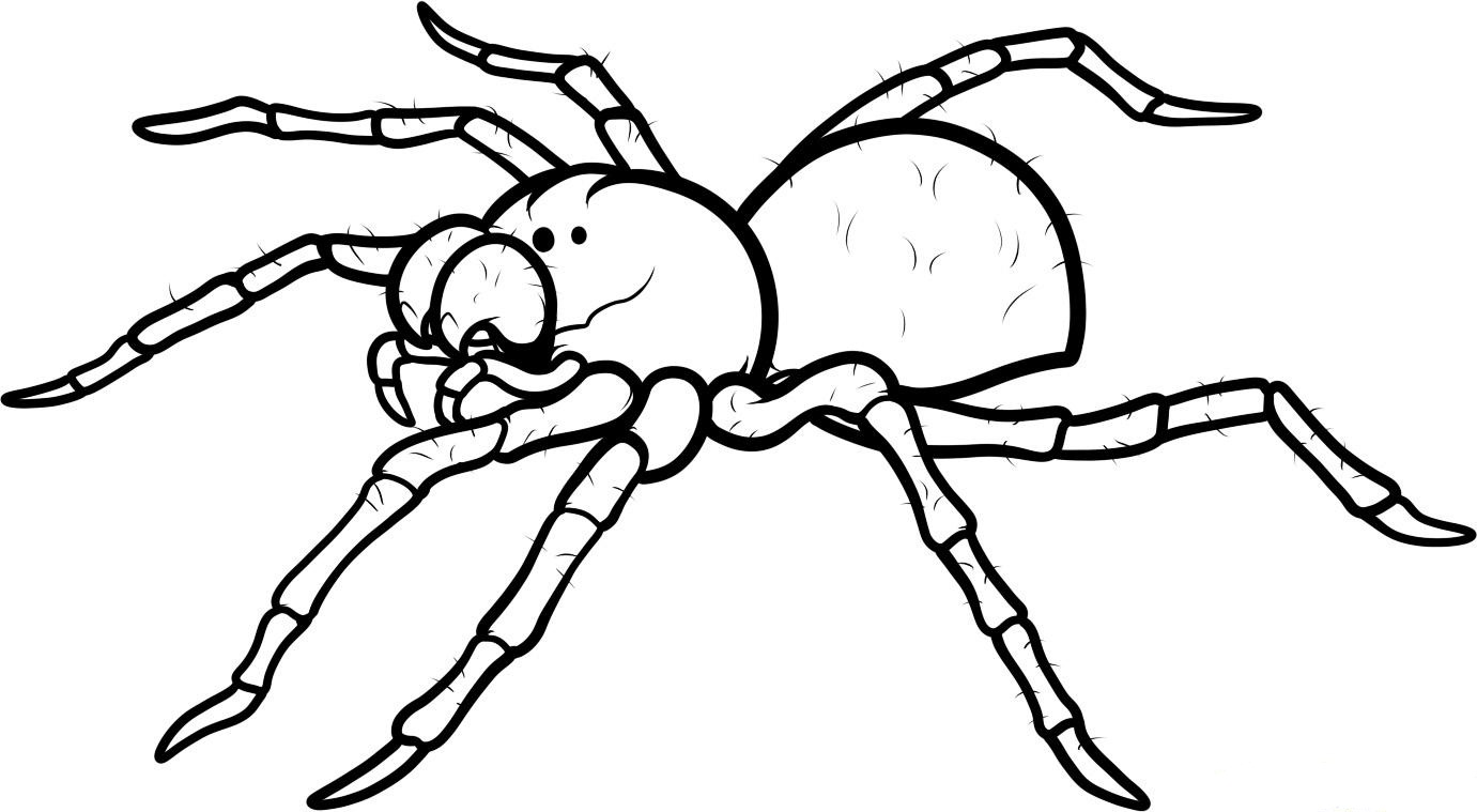 spider coloring pages to download and print for free