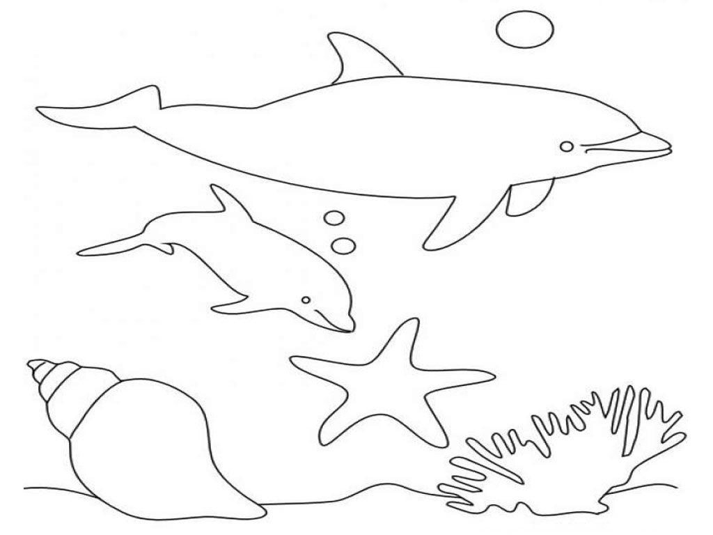 dolphin tale printable coloring pages - photo#16