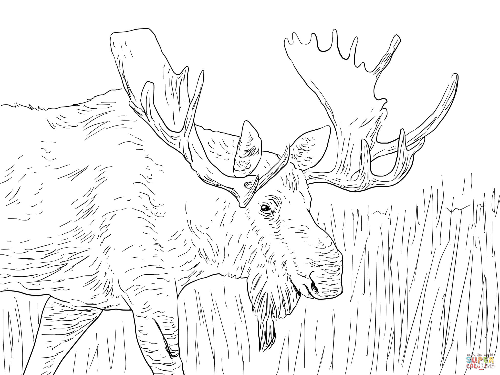 Moose coloring pages to download and print for free