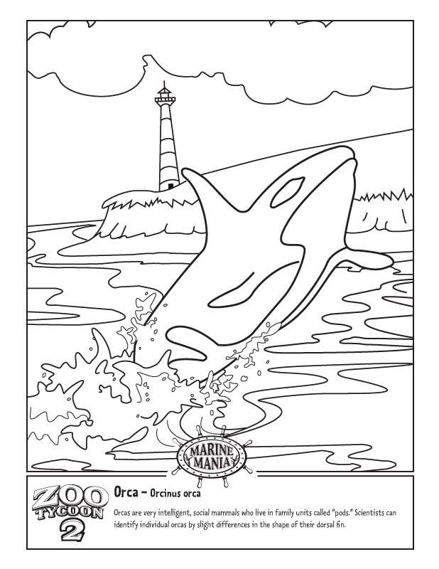 Orca Whale Coloring Pages Printable Baby Killer Whale Colouring