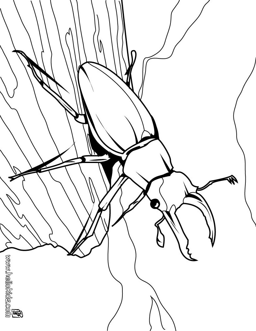 free printable bug coloring pages - photo#46