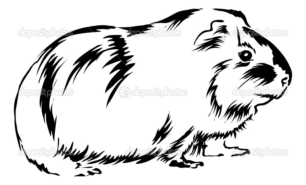 Guinea pig coloring pages to download