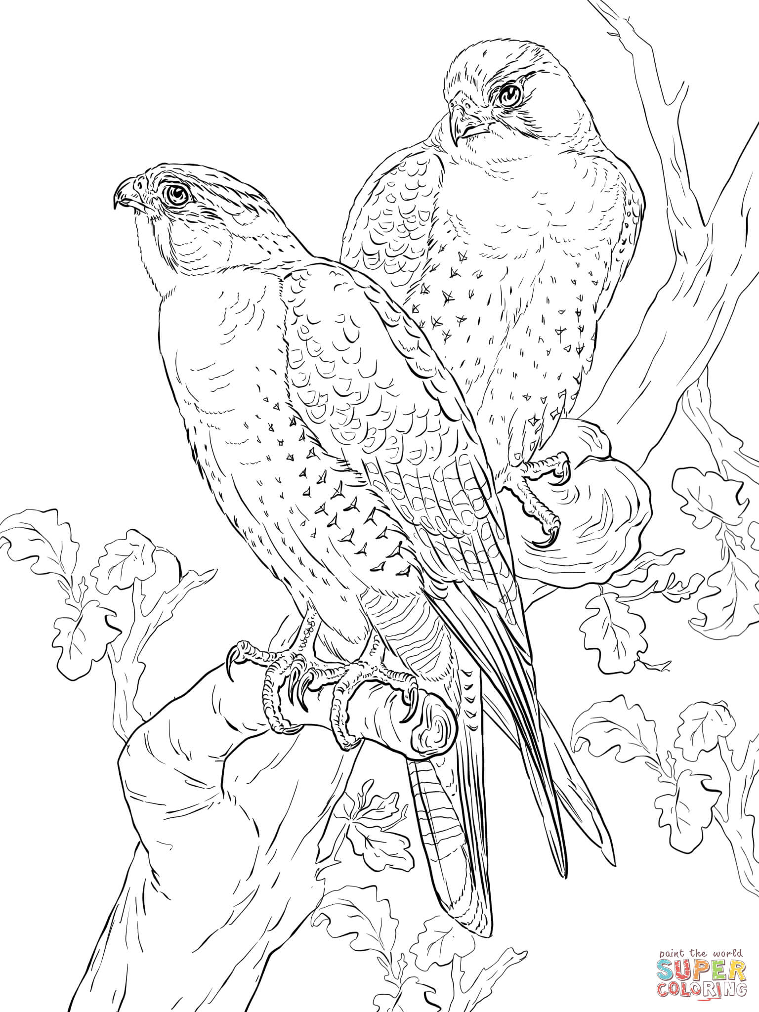 Falcon coloring pages to download