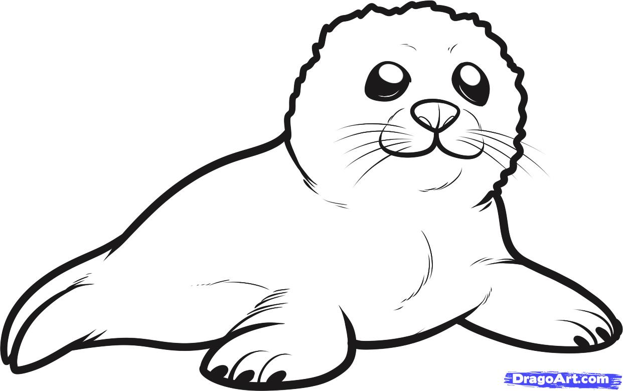 seal coloring pages seal coloring pages download and print for free