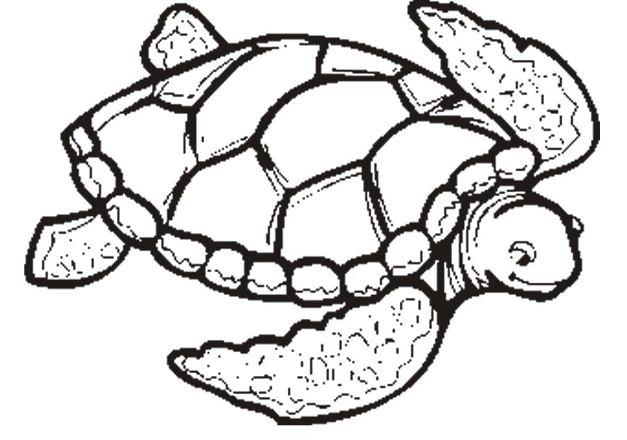 free coloring turtle pages - photo#20