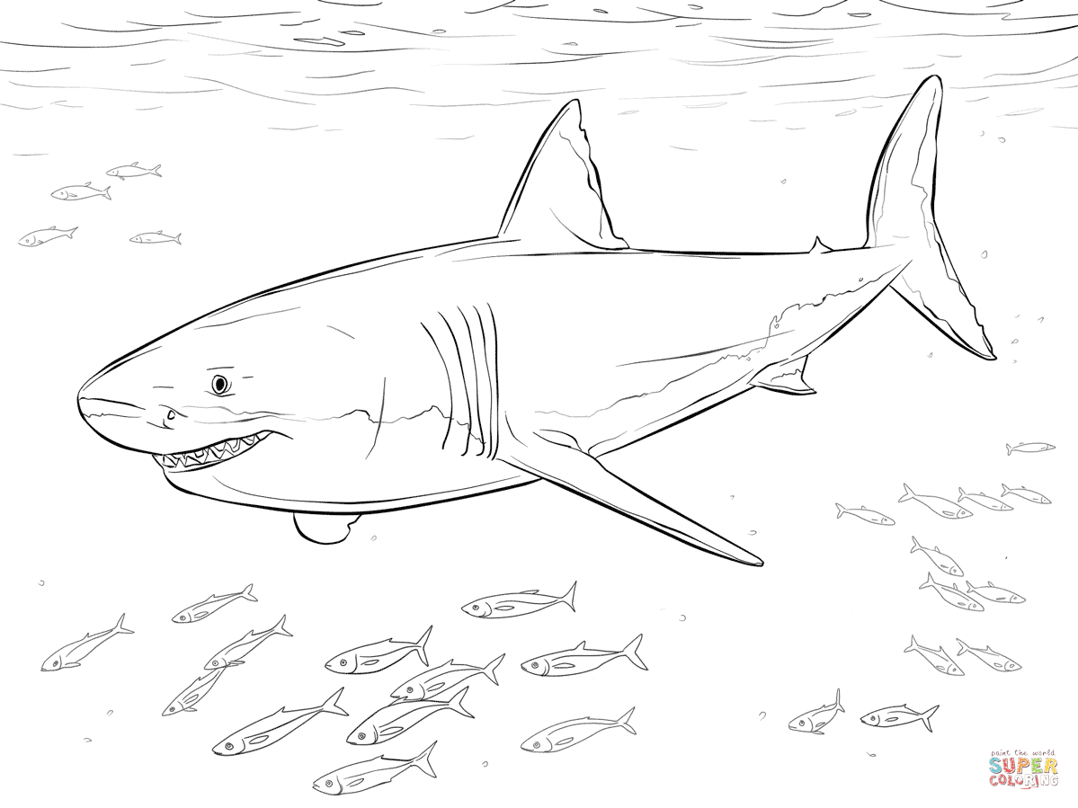 Great white shark coloring pages to download and print for ...