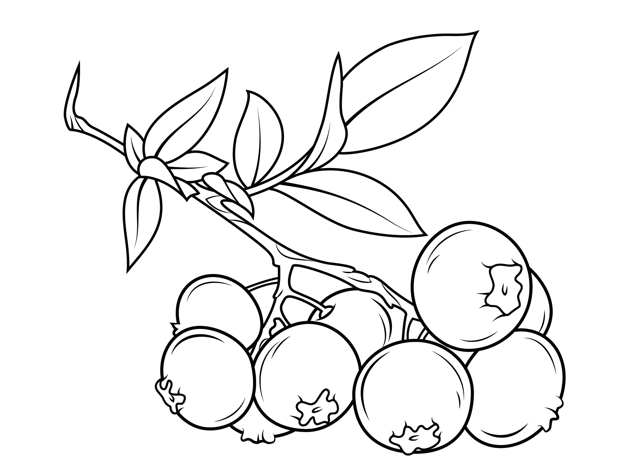 cranberry coloring pages kids - photo#19