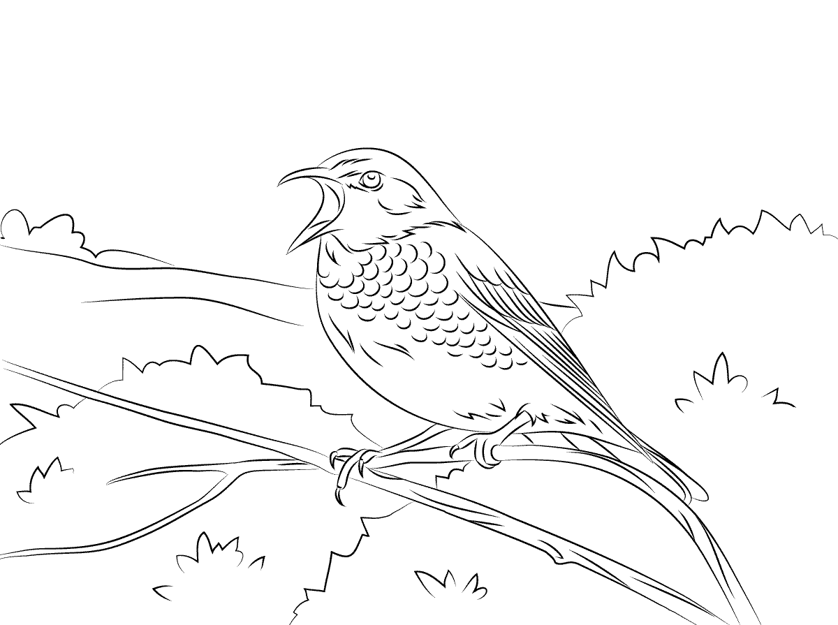 Thrush coloring pages to download