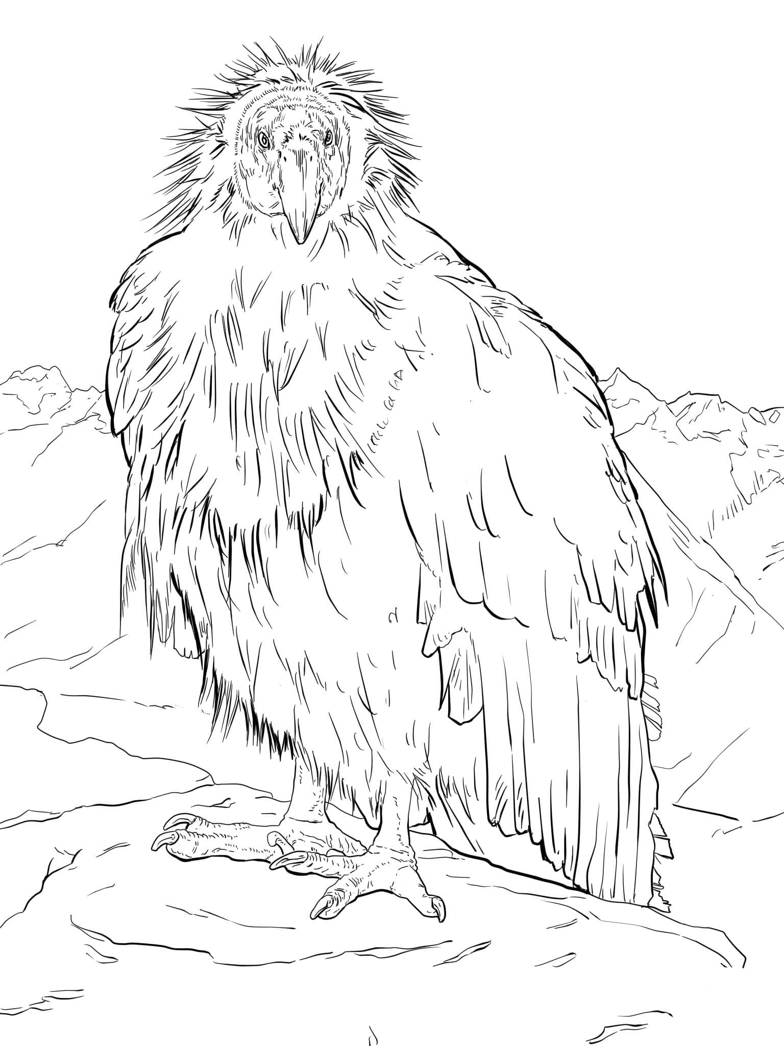 Condor coloring pages to download