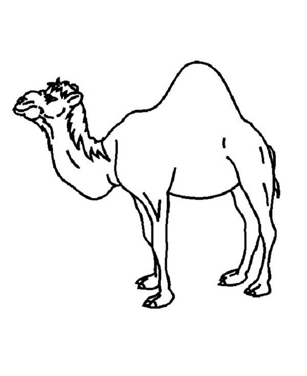 camel coloring pages for kids - photo#21
