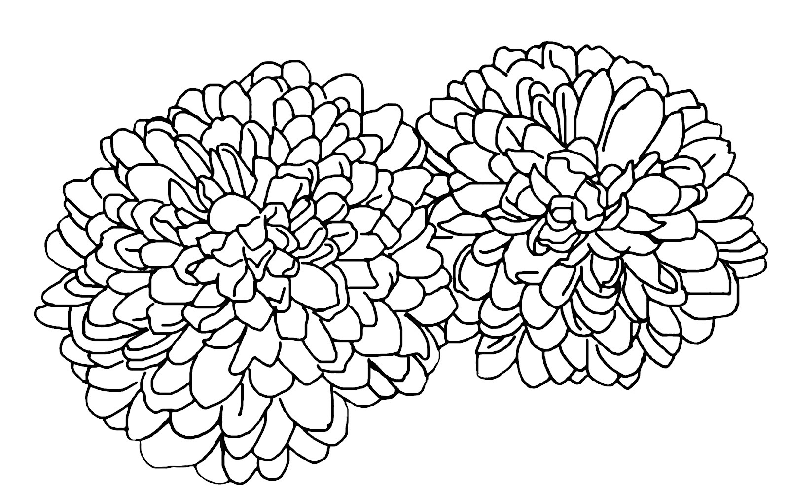 Chrysanthemum coloring pages to
