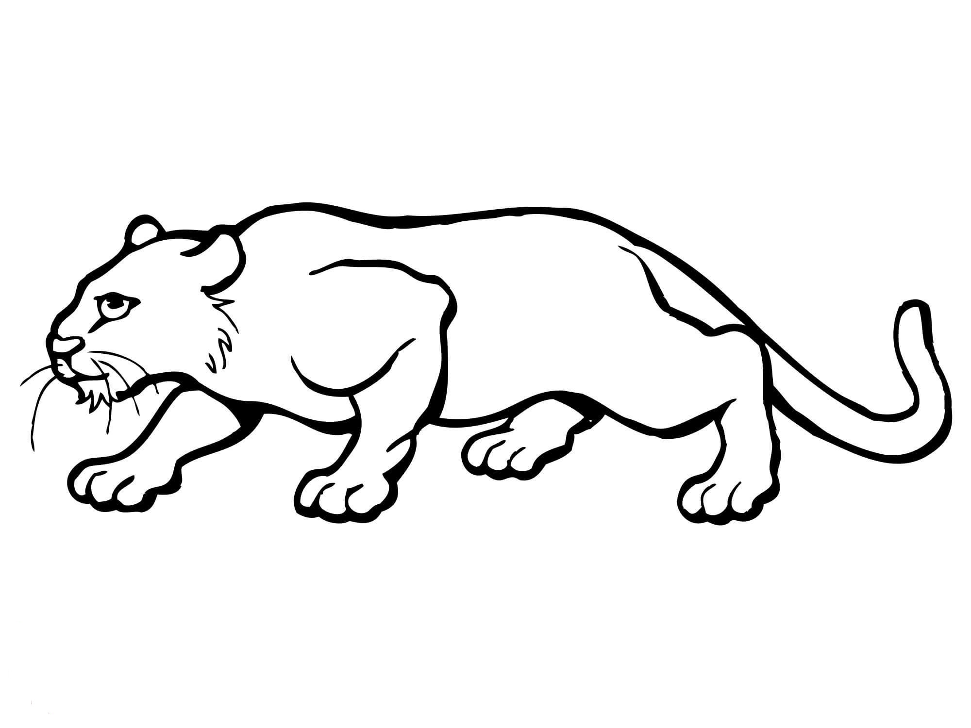 Puma coloring pages to download