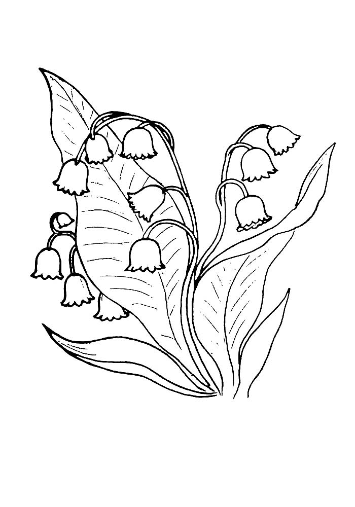 Lily of the valley coloring pages