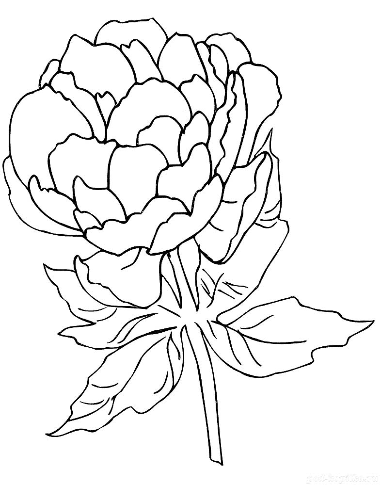 Peony Coloring Pages To Download And Print For Free