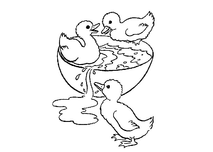 Realistic Baby Duck Coloring Pages