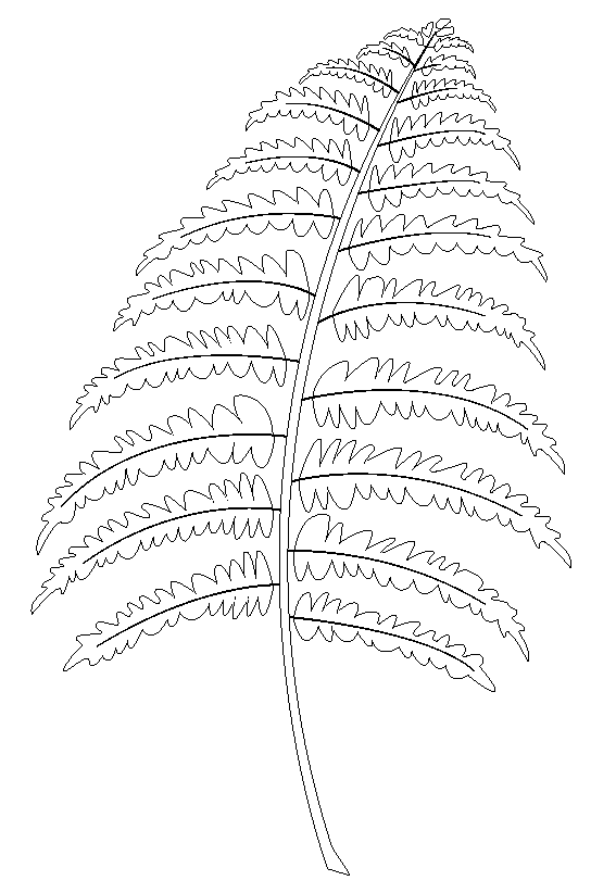 Fern Coloring Pages To Download And Print For Free