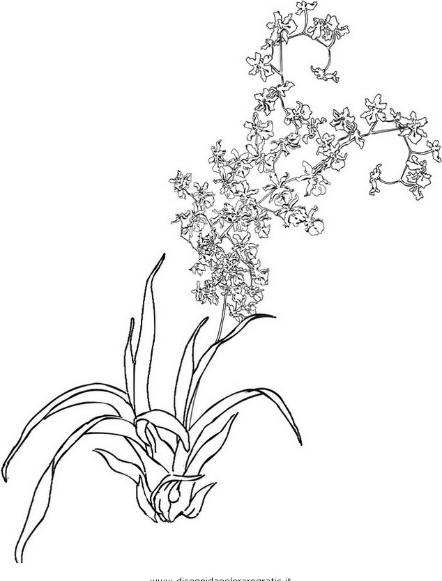 Orchid coloring pages to download and print for free for Fiori grandi da colorare