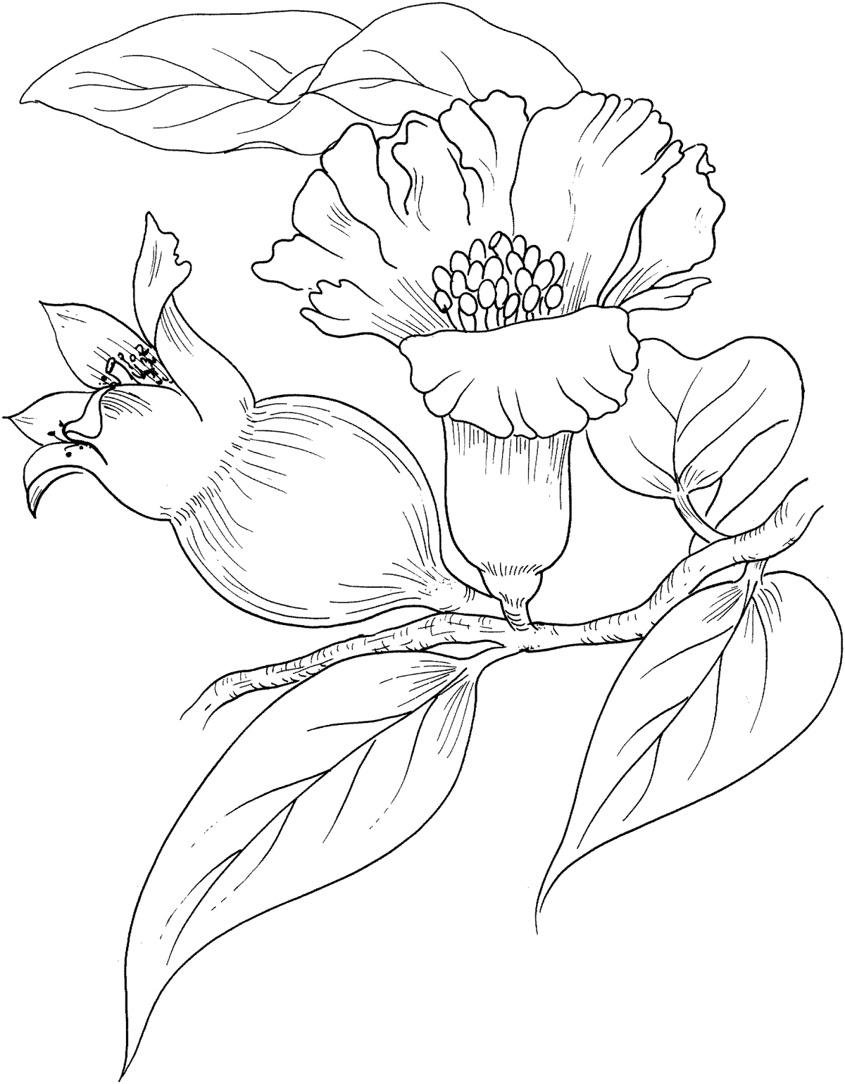 Gar fruit coloring pages to