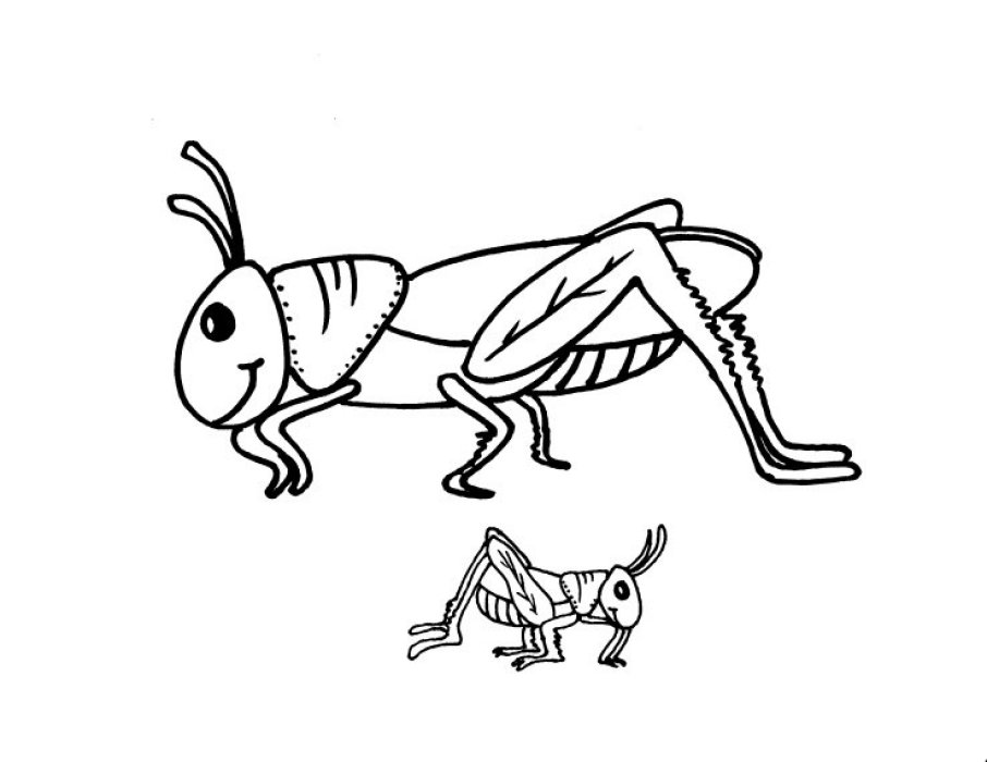 Grasshoppers coloring pages to