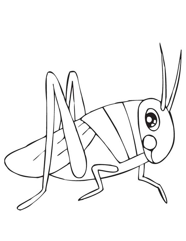Grasshoppers Coloring Pages To Download And Print For Free