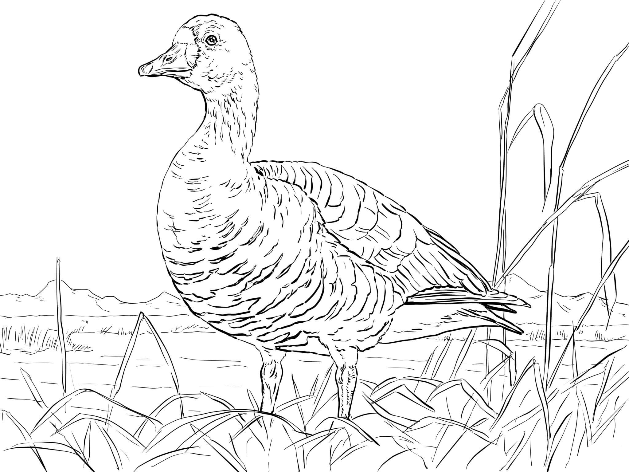 Coloring: Goose Coloring Pages To Download And Print For Free