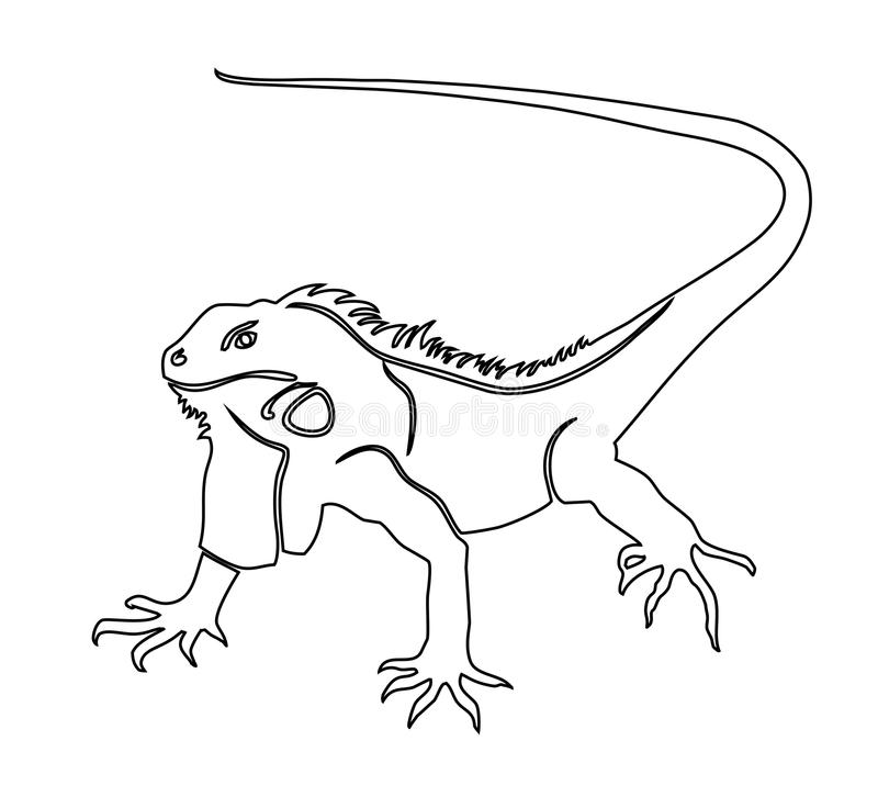 Iguana coloring pages to download and print for free