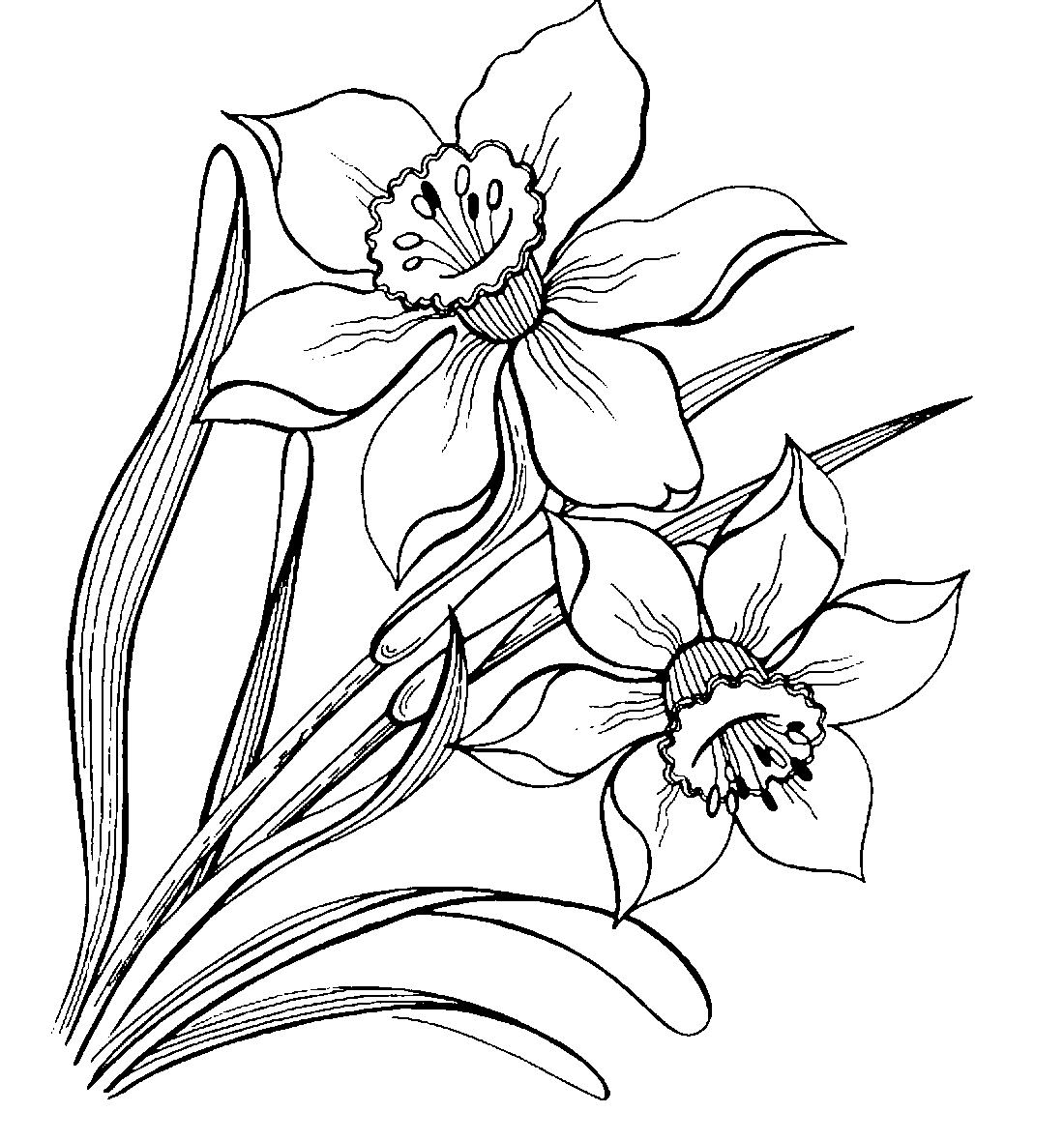 Narcissus coloring pages to download and print for free