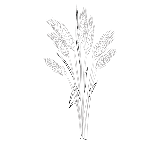Wheat coloring pages to download