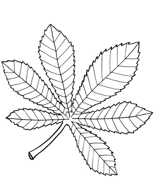 chestnut tree leaf coloring pages - photo#9