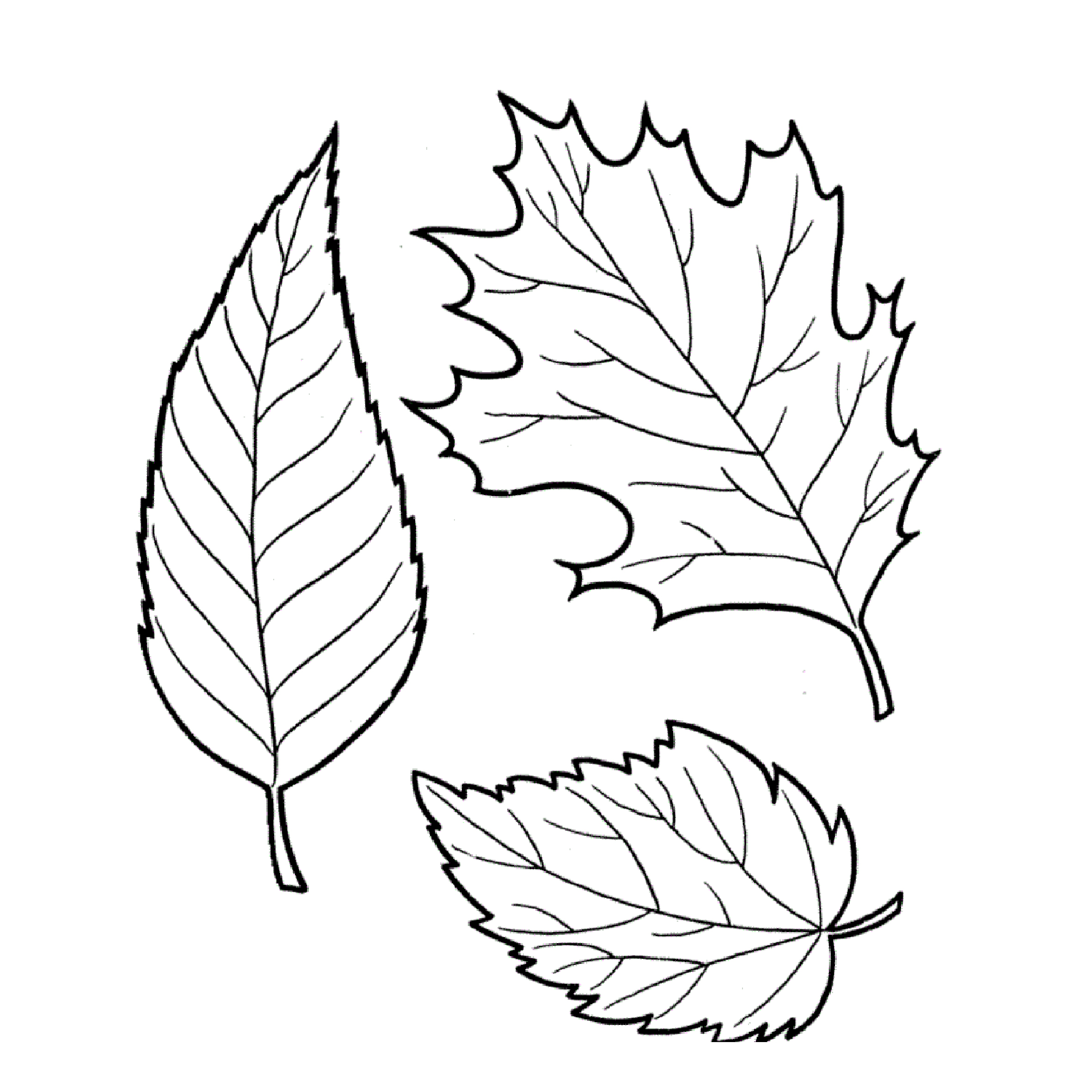 Tree leaves coloring pages for