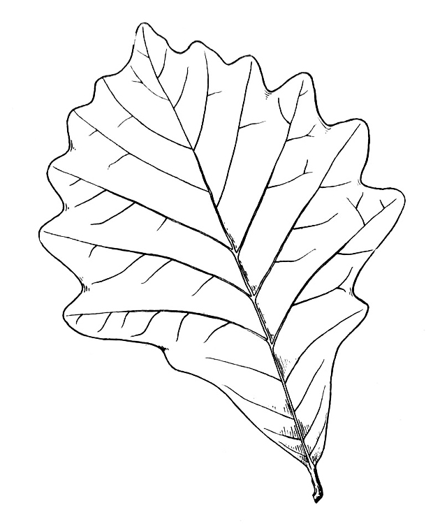 free coloring pages of tree bark