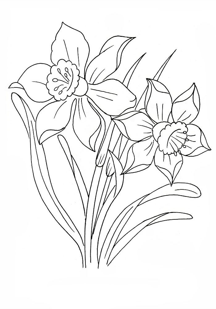 Narcissus coloring pages to download