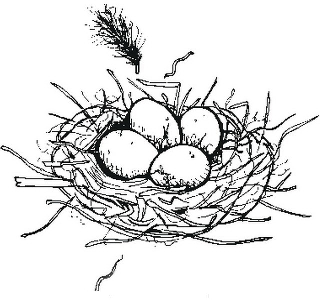 Nest Coloring Pages to download and print for free