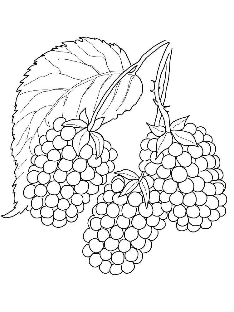 Blackberry coloring pages to download