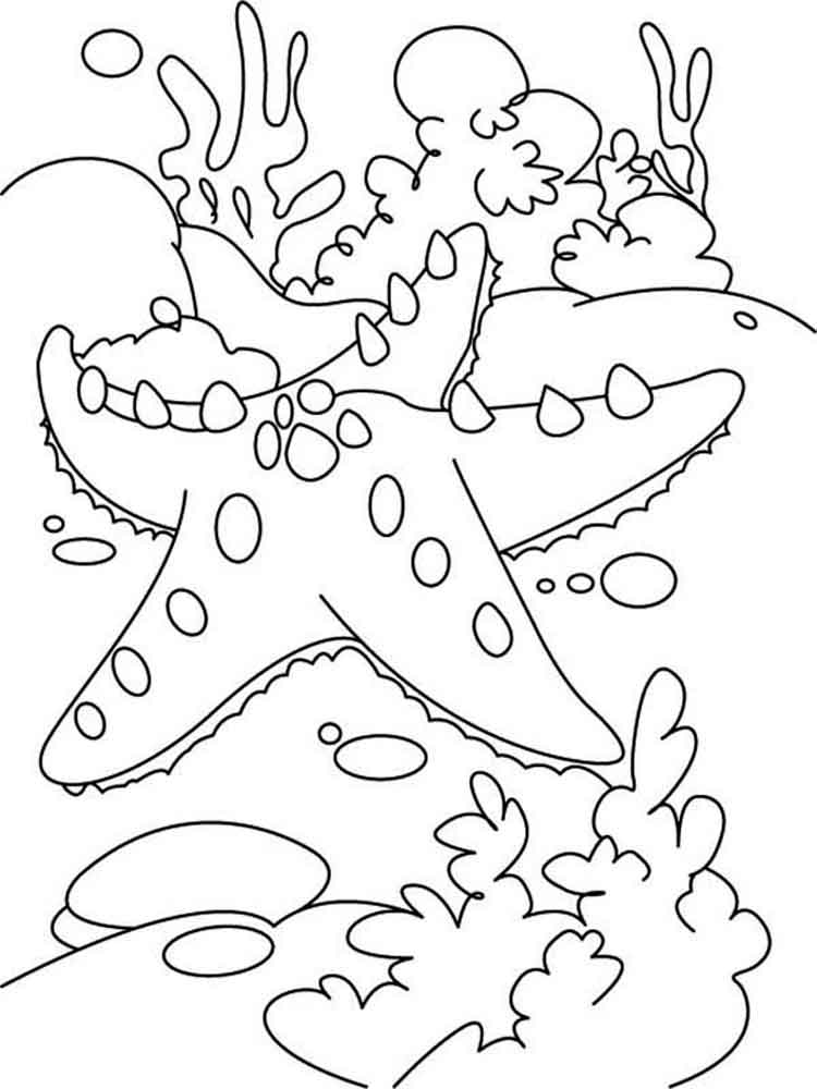 Starfish coloring pages to download