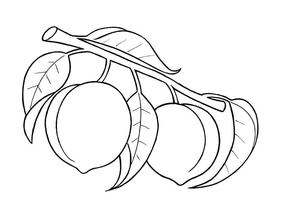 Onion Coloring Pages Download And Print Onion Coloring Pages