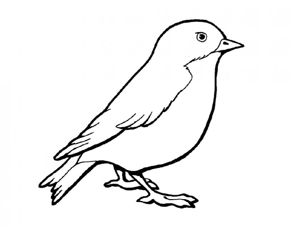Sparrow coloring pages to download